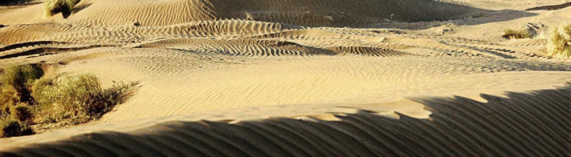 'Туранские равнины – место обитания вымершего туранского тигра