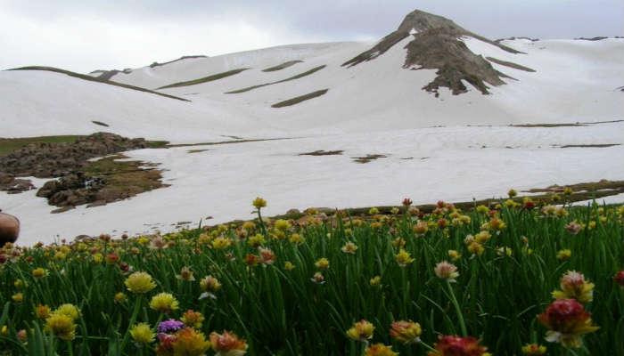 Угамский хребет цветы