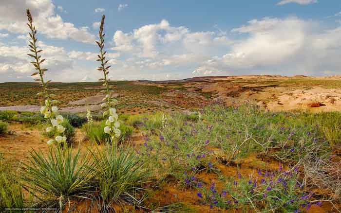 Растения Узбекистана