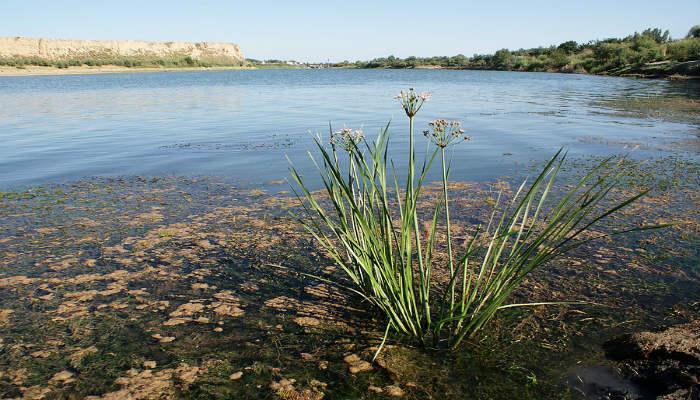 флора реки