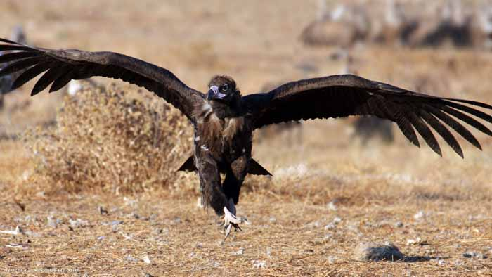 Птицы Узбекистана