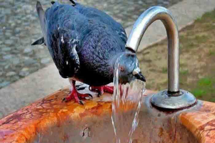 жара в узбекистане