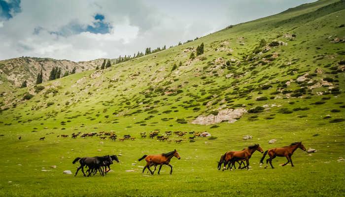 ферганские кони